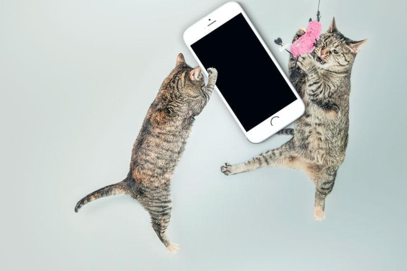 iphone6-hoshii